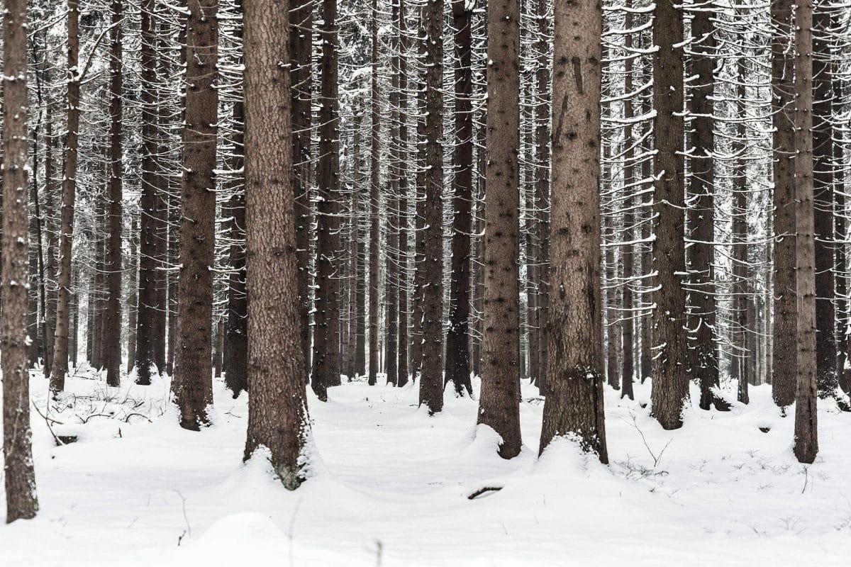 9 чудесных фото, напоминающих о прелестях зимы рис 5