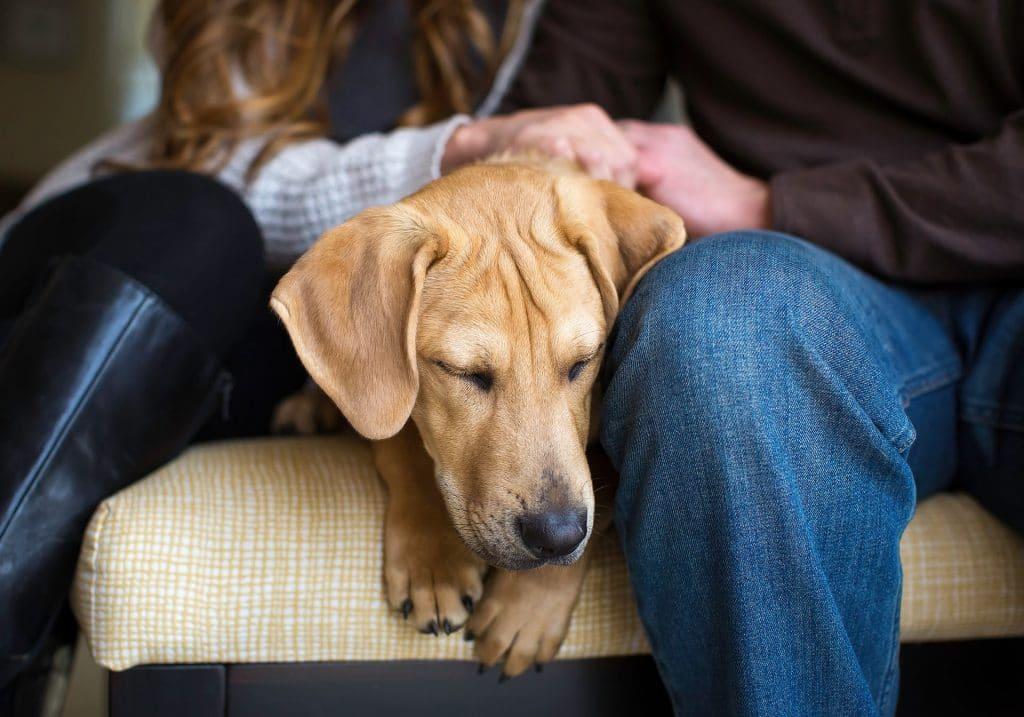 фото грустной собаки