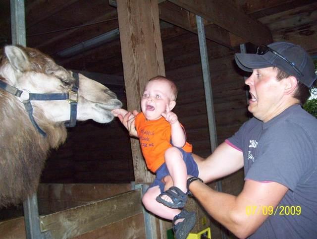 отец с сыном и верблюд