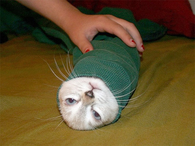 мордочка кота