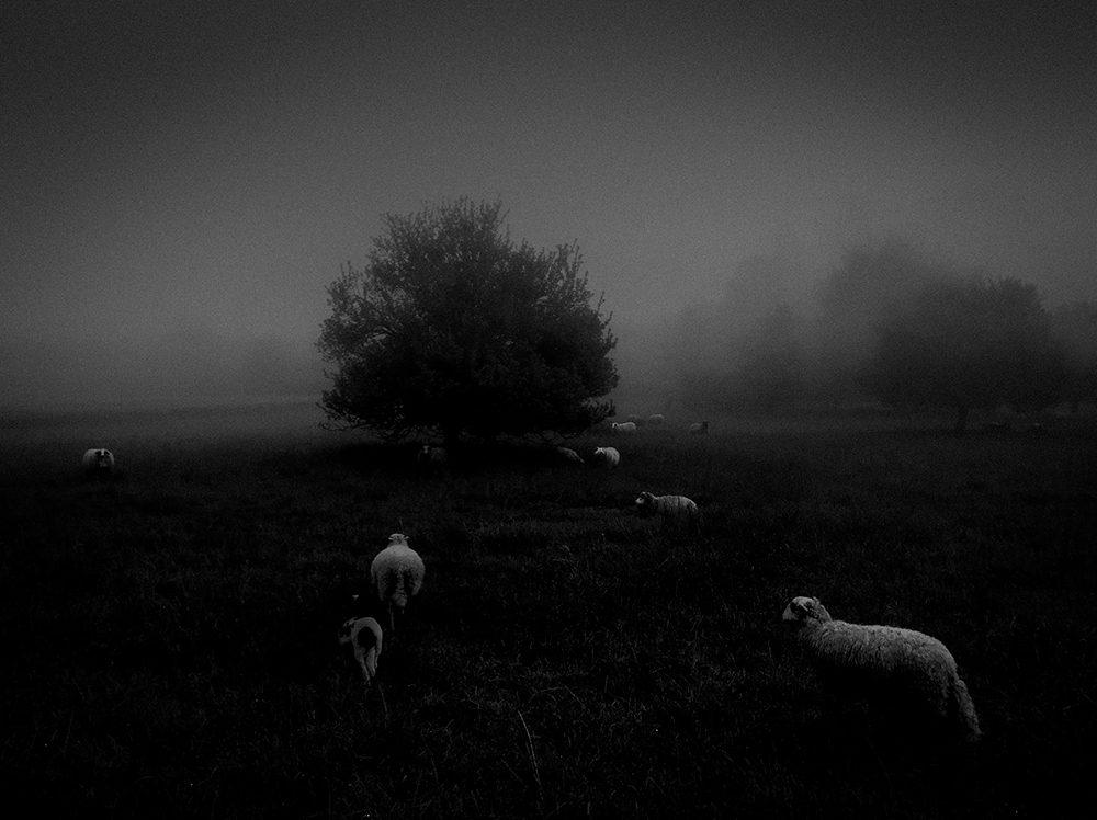 туман фото айфон