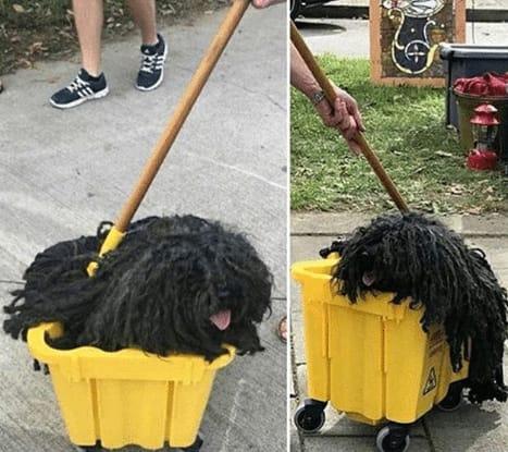 собака сидит в желтой тележке