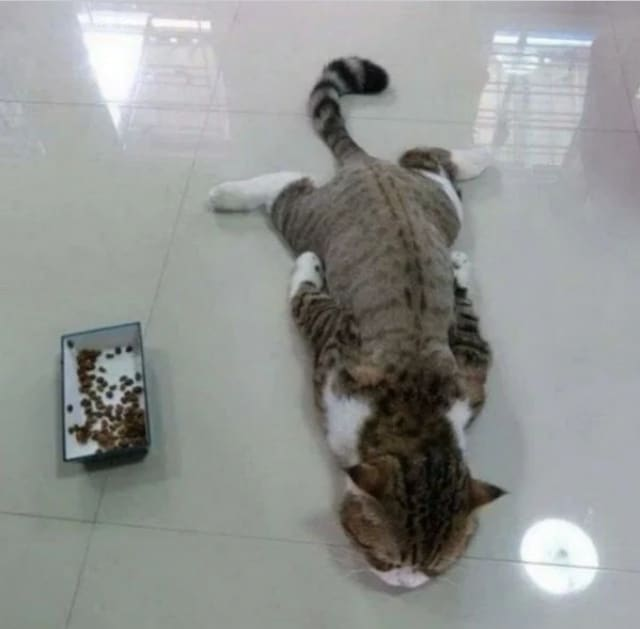 полосатый кот