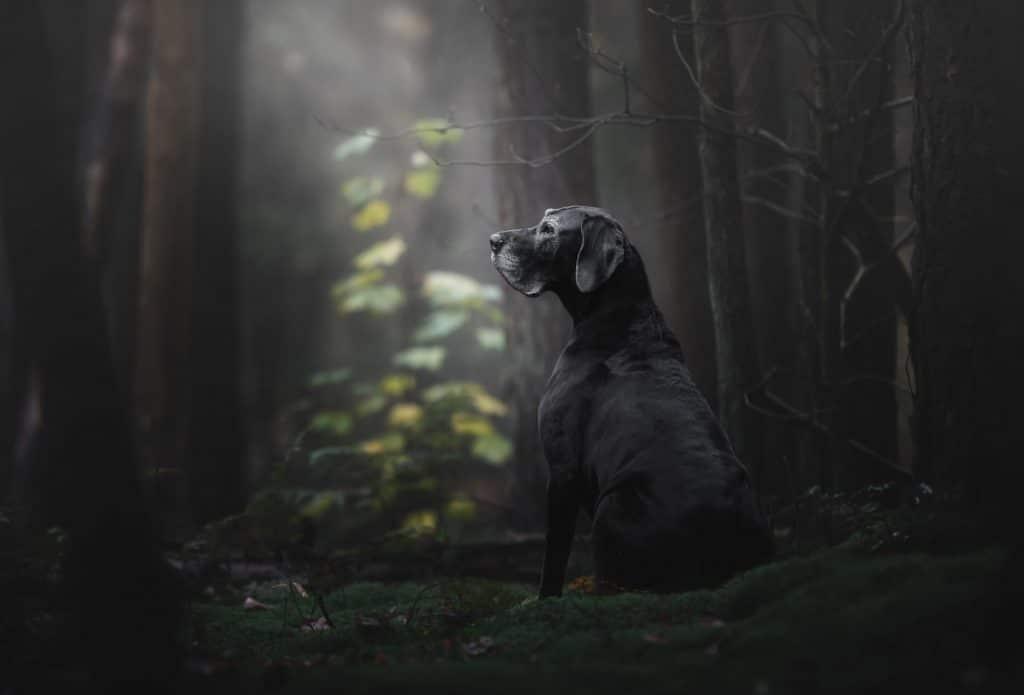 фото черной собаки в лесу