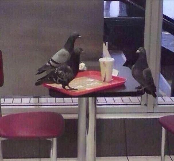 голуби на столе