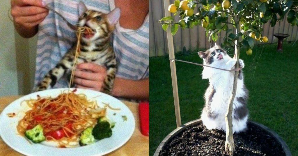 15 снимков котов, которые подарят тебе улыбку и поднимут настроение!