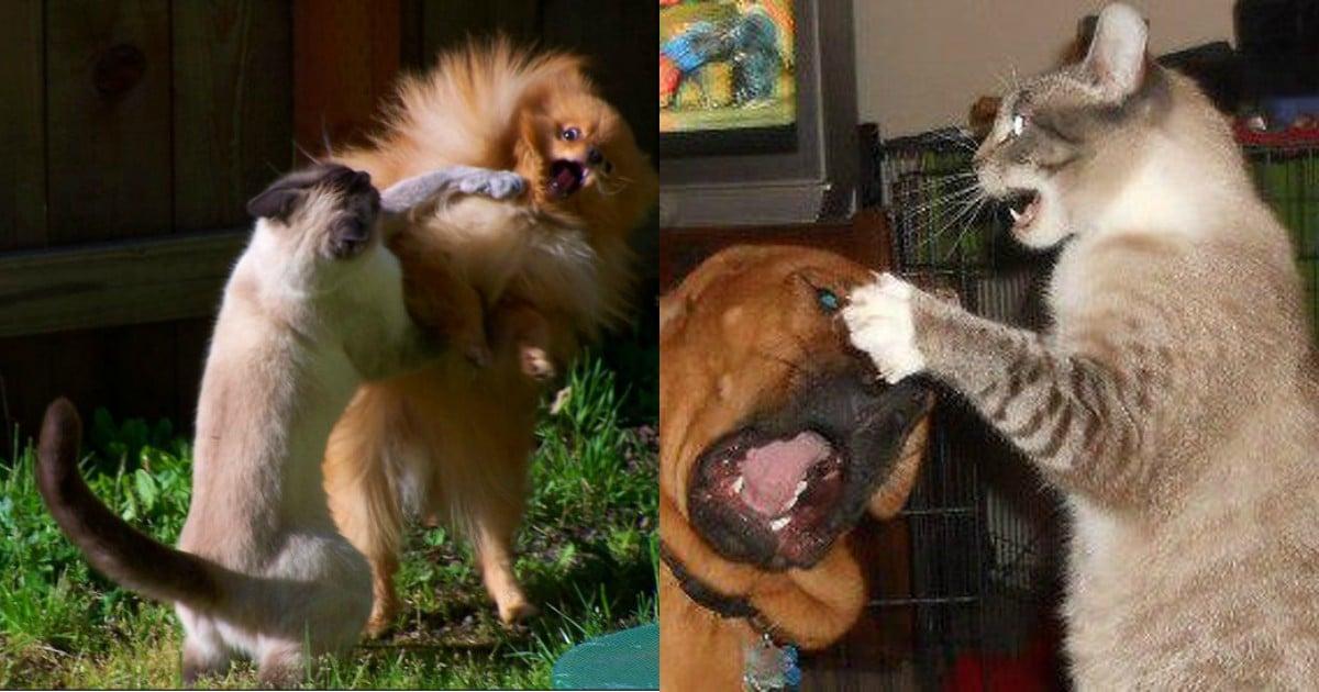 15 фото котов и собак, которые терпеть друг друга не могут!