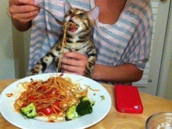 кот и спагетти
