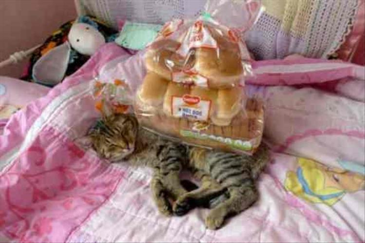 полосатый кот рис 3