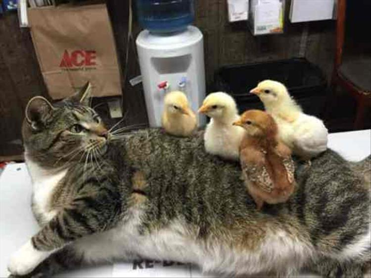 полосатый кот рис 2