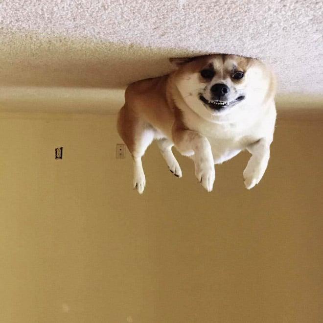 собака лежит на полу кверху лапами