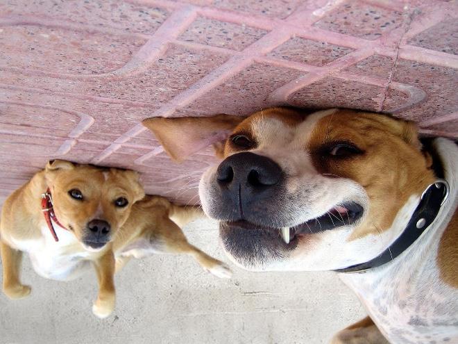 собаки лежат на спине