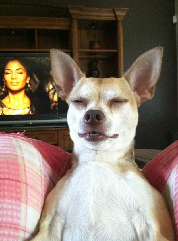 собака с закрытыми глазами