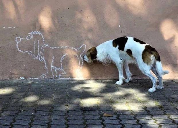 собака у стены