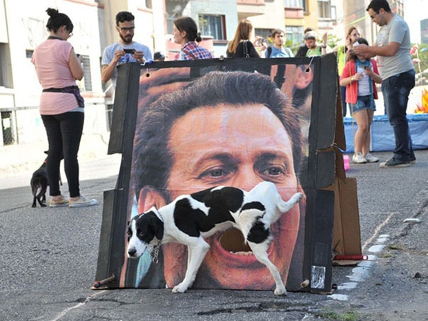 собака на улице