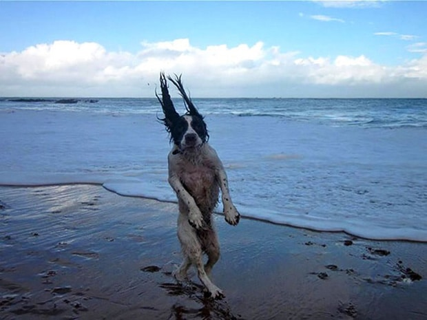 собака на берегу моря