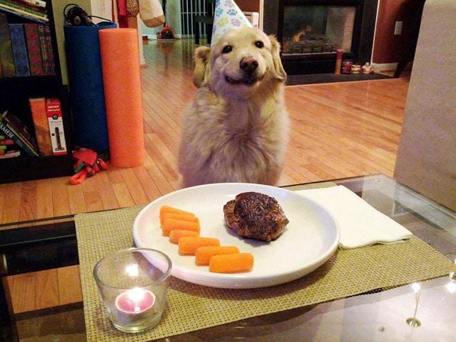 собака улыбается в свой день рождения