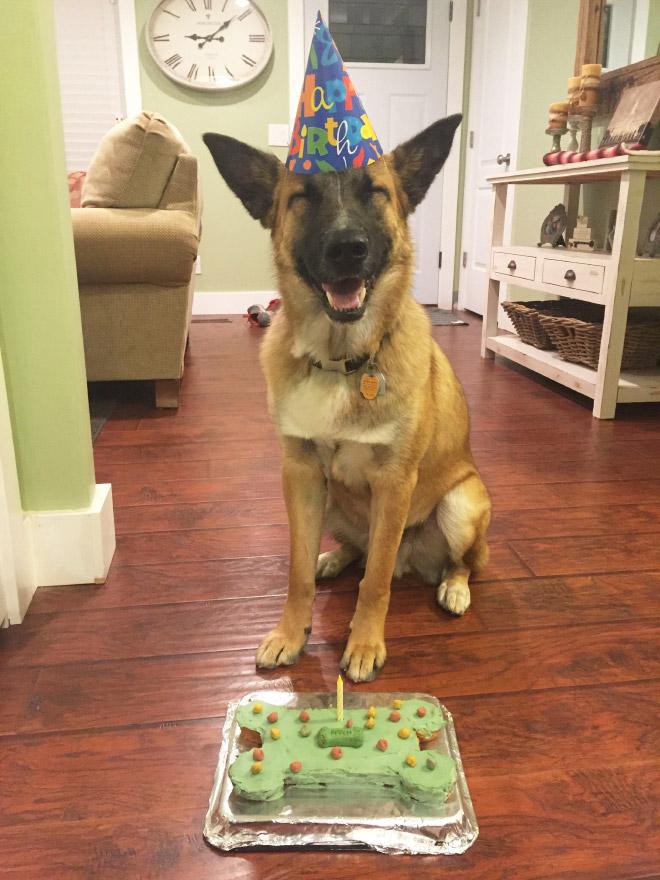у пса день рождения