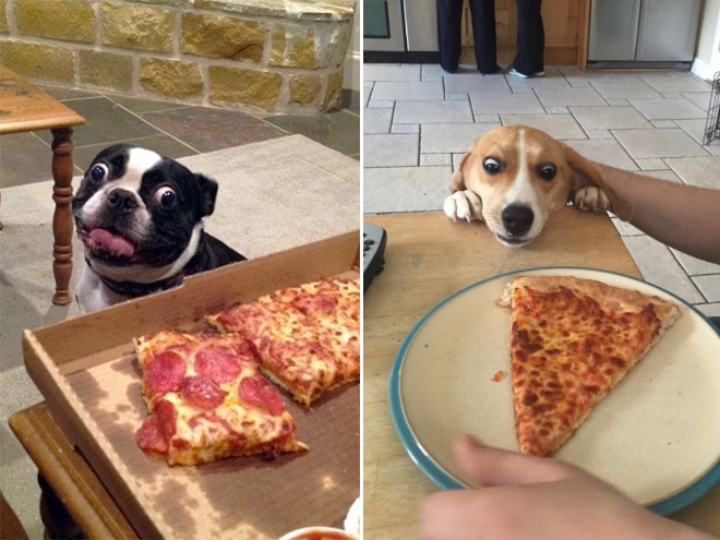 собаки смотрят на пиццу
