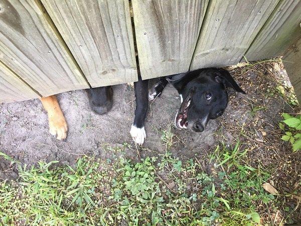 пес и забор
