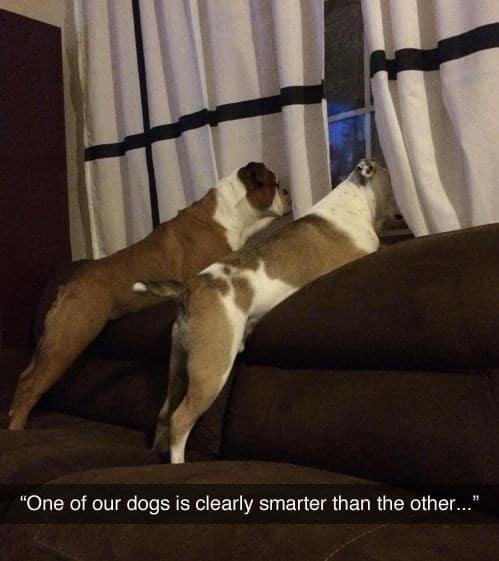 собаки рис 2