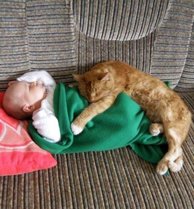рыжий кот спит на младенце