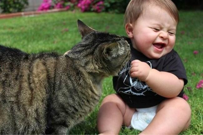кошка и смеющийся ребенок