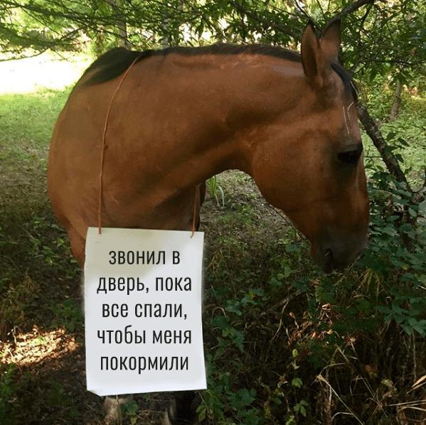 гнедой конь с табличкой на шее