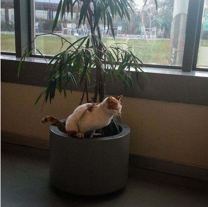 кошка сидит в цветке