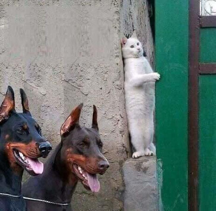 белый кот прячется от собак