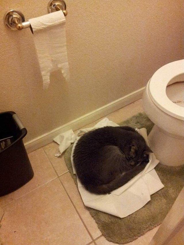 кот спит возле унитаза