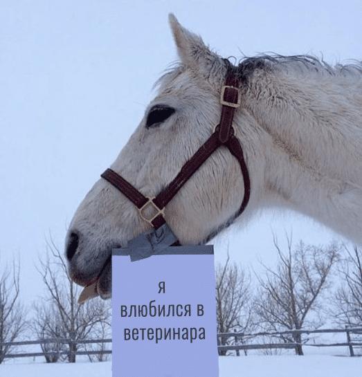 белая лошадь с запиской
