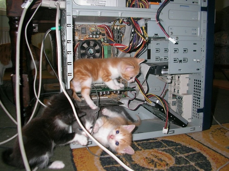 котята в системном блоке