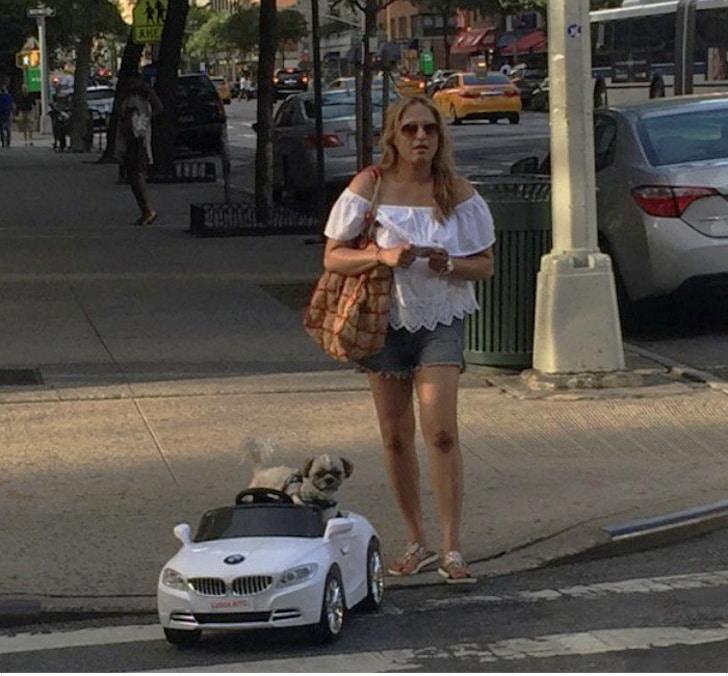 собака в игрушечной машине