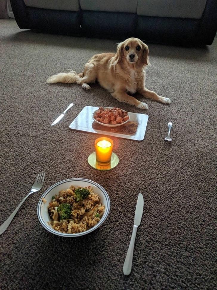 ужин на двоих с собакой
