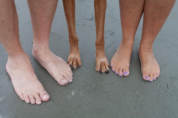 фото с собакой на пляже
