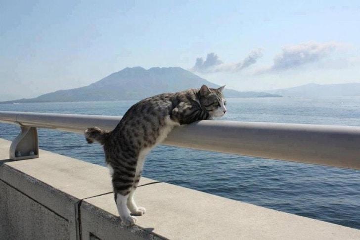 кот смотрит на океан