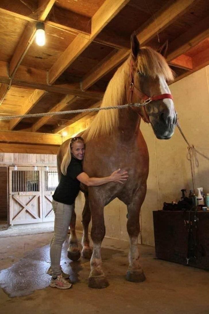 девушка рядом с конем