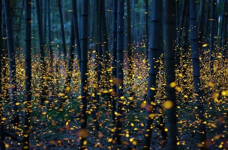 светлячки в лесу