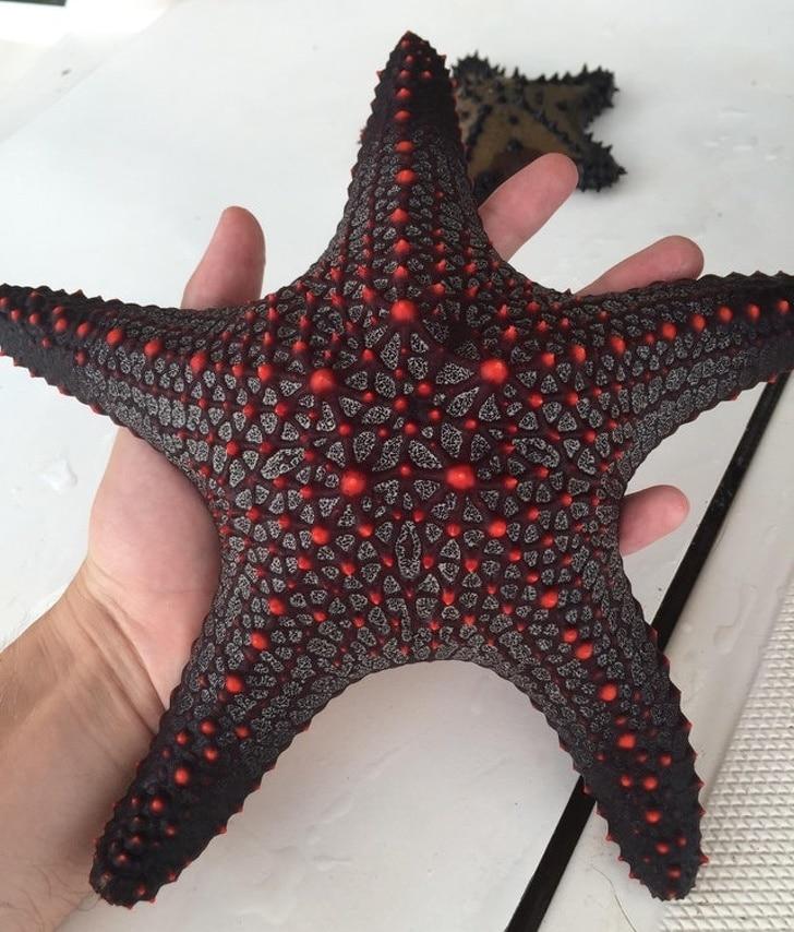 красивая морская звезда