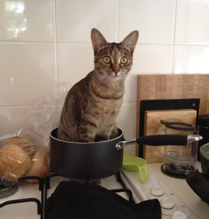 кот сидит в кастрюле