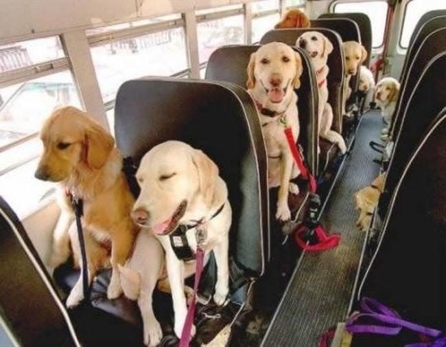 собаки в автоусе