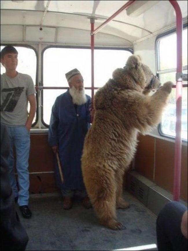 медведь в автобусе