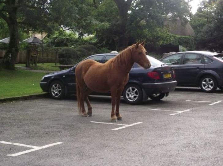 конь на парковке