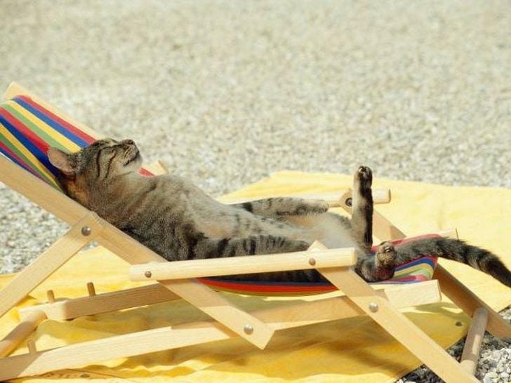 кот на ортдыхе
