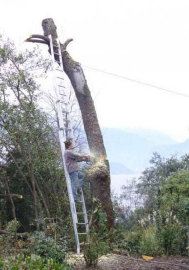 срубить дерево