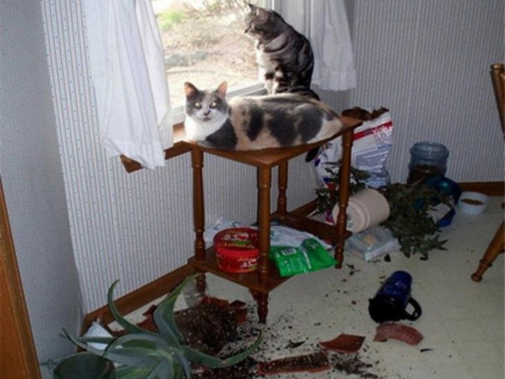 коты перевернули цветы
