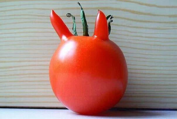 помидор с ушами