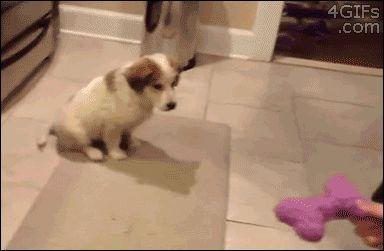 щенок играет с хозяином