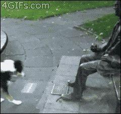 собака играет с памятником